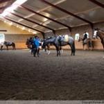 Paardenhoeve Gallery homepage_6