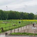 Paardenhoeve Gallery homepage_3