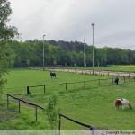 Paardenhoeve Gallery homepage_4