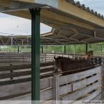 Paardenhoeve Gallery homepage_5